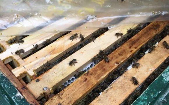 Wo kommt unser Honig her?