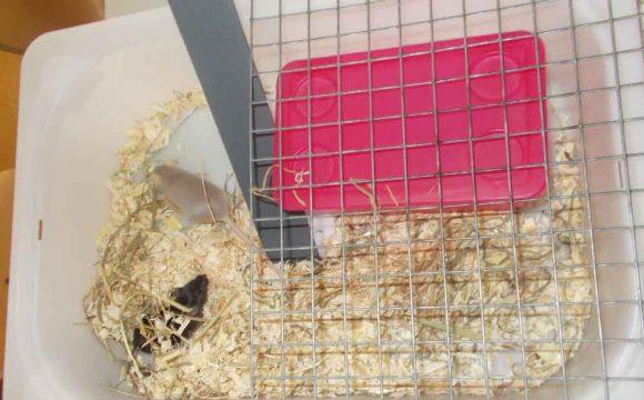 Lebendige Mäuse im Biologieraum